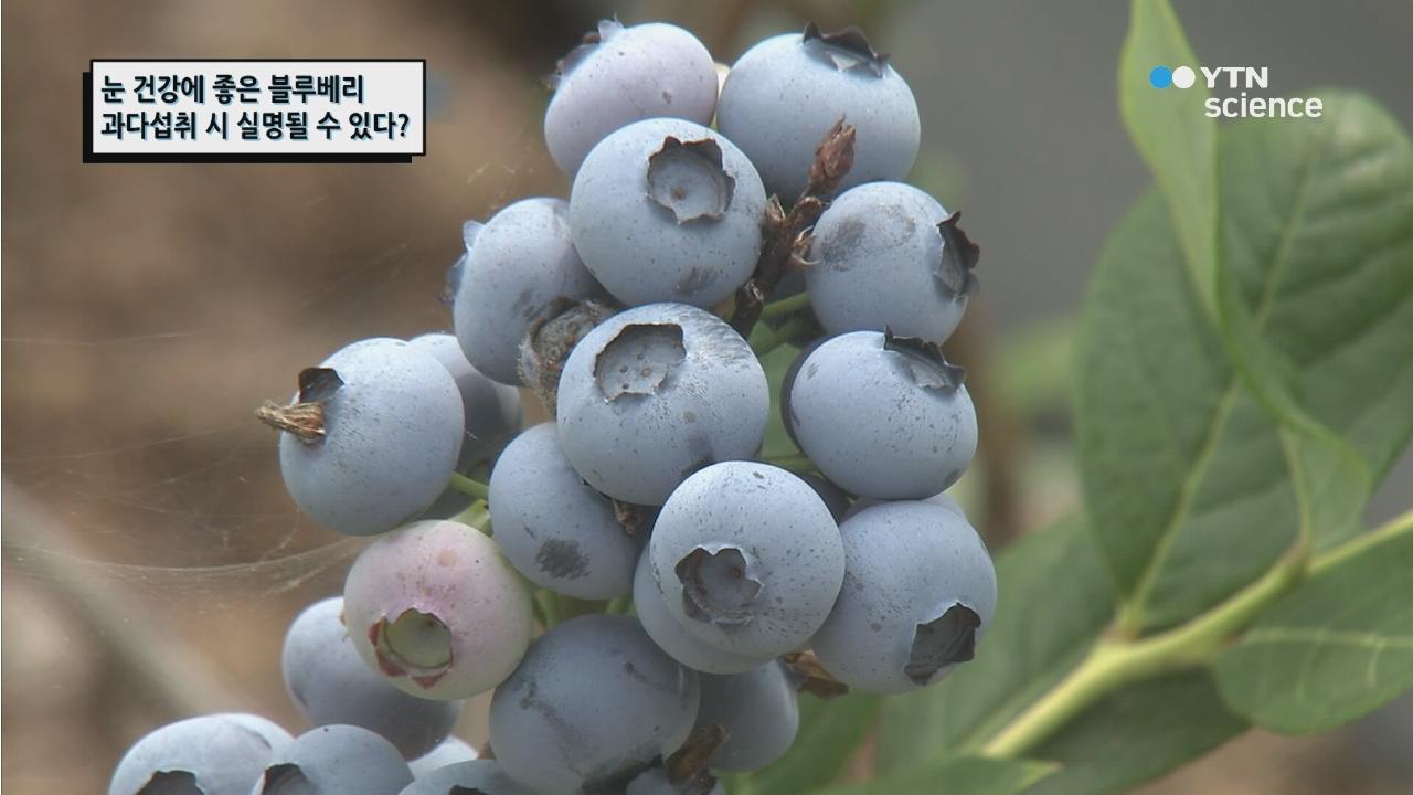 눈 건강에 좋은 블루베리 과다섭취 시 실명될 수 있다?