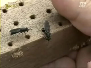 마지막 생물자원 곤충의 대활약