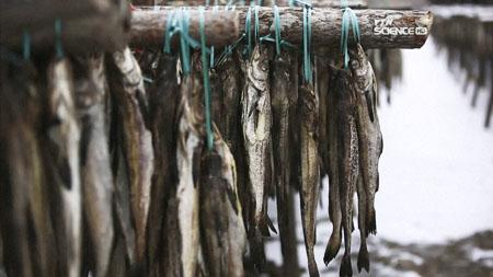 강원도 산골 漁밥상, 황태&송어