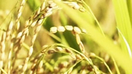쌀의 고장, 이천의 명품 밥상