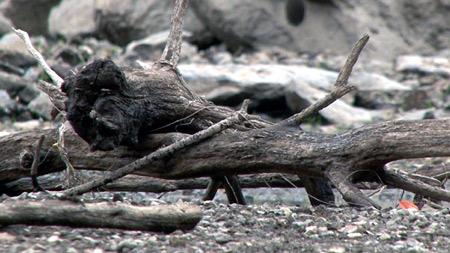 최악의 가뭄, 신음하는 대한민국
