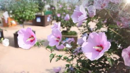 백성이 사랑한 나라꽃, 무궁화