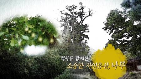 역사와 함께한 소중한 자연유산, 나무