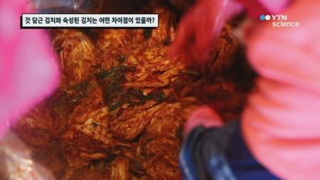 갓 담근 김치와 숙성된 김치는 어떤 차이점이 있을까?