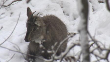 야생동물의 혹독한 겨울나기 1부