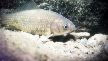 토종물고기를 지켜라!