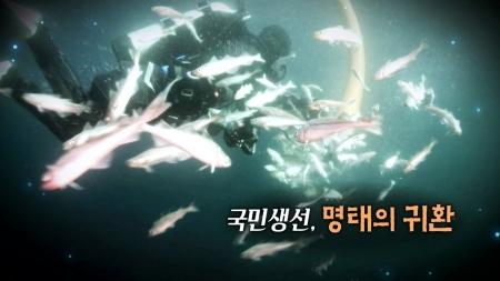 국민 생선, 명태의 귀환!