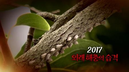 2017 외래 해충의 습격