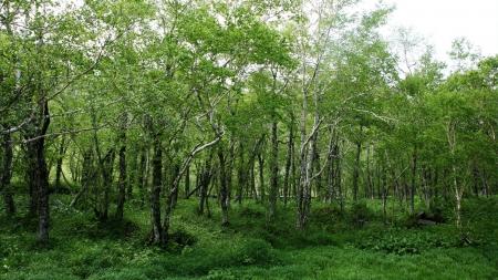산과 숲을 지키는 길