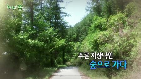 푸른 지상낙원 숲으로 가다