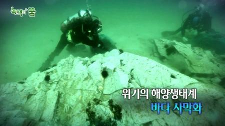 위기의 해양생태계, 바다 사막화