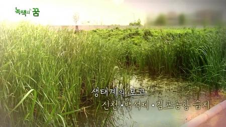 생태계의 보고 : 신천, 백석제, 김포공항 습지