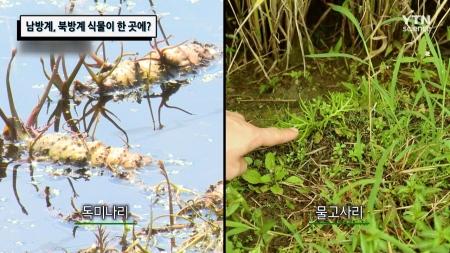 남방계, 북방계 식물이 한 곳에?
