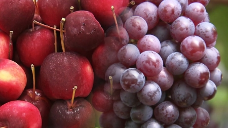 껍질째 먹어서 더 좋은 과일