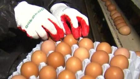 농식품부, 농약 기준치 초과한 계란 수거해 폐기