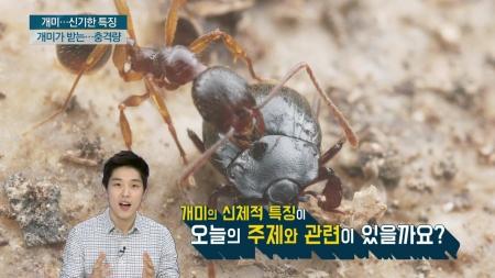 개미는 왜 높은 곳에서 떨어져도 죽지 않을까?