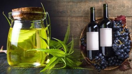 [과학본색] 의료용 대마 안전한가?…와인맛 결정하는 빈티지란?