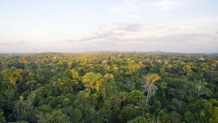 아마존 열대우림 30년간 78만㎢ 사라져