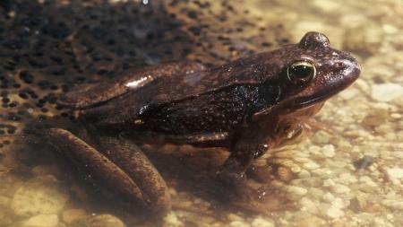[과학본색] 개구리에서 관절염 치료제 찾았다…흔들어서 따뜻해지는 '손난로'의 원리