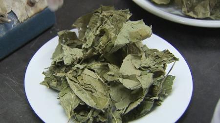 검정 콩잎에서 비만 예방 효능 확인