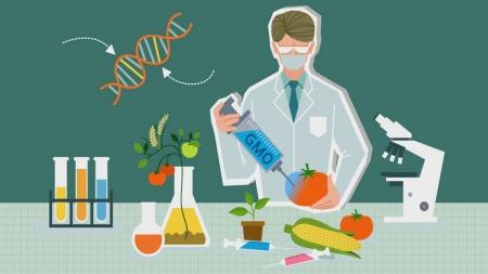 [과학돋보기] GMO…안전한가, 유해한가? 끝없는 논란의 진실
