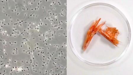 [과학본색] 50년 된 정자에서 태어난 생명…새우껍질로 만든 플라스틱