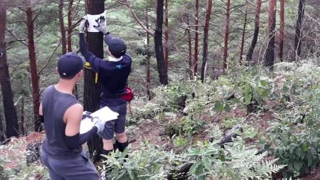[과학본색] 산불로 훼손된 산림, 스마트 조사…벚꽃의 적 '빗자루병'