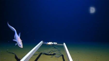 역사상 가장 깊은 바닷속 탐험…수심 11km에선 어떤 일이?
