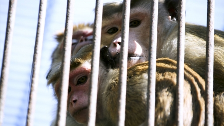 '국제 인증' 동물원과 동물 복지 논란