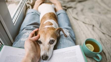 개 키울 사람은 정해져 있다?