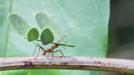 [줌 인 피플] 에그박사가 들려주는 자연과 곤충이야기