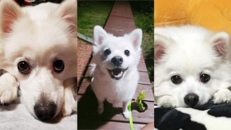 [과학본색] ②애절한 강아지 눈빛, 거부할 수 없는 이유