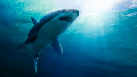 [과학본색] 제주 바다에 나타난 상어…온난화가 부른다?
