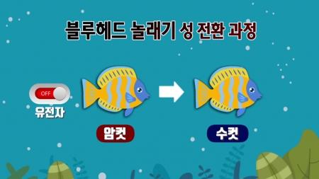 며칠 만에 수컷 된 암컷 물고기…성 전환 이유는 스트레스? 이미지