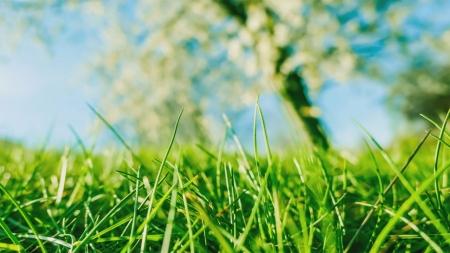 [과학본색] 천연 에어컨 잔디…녹지로 무더위 잡는다