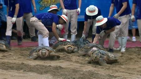 멸종위기 '바다거북' 14마리 제주바다에 방류