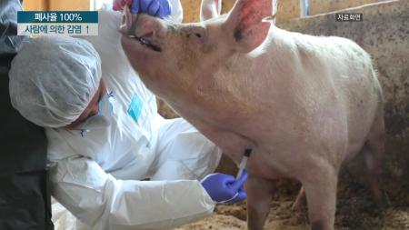 아프리카돼지열병은 어떤 질병?