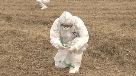천안서 조류인플루엔자 항원 검출...올가을 첫 사례