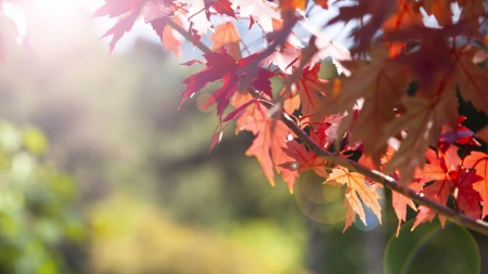 [날씨학개론] 가을 속담으로 알아보는 '날씨 이야기'