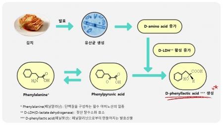 김치 발효할 때 항균 활성 우수한 '페닐젖산' 생성돼 이미지
