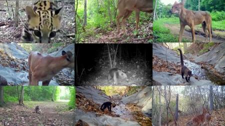 '야생동물의 천국' 밀착 탐사...숲 속 '몰카' 프로젝트