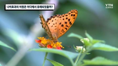 나비효과의 어원은 어디에서 유래되었을까?