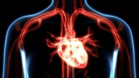[내 몸 보고서] 겨울에 더 치명적인 '심혈관질환'