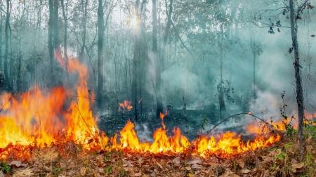 [날씨학개론] 산불로 몸살 앓는 지구촌…원인은 무엇일까?