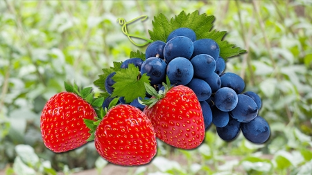 농식품 수출 75억 달러 목표...딸기·포도 1억 달러 육성