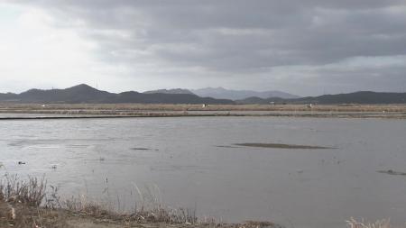 습지 200곳에 겨울 철새 162만여 마리 서식