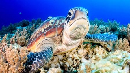 [날씨학개론] 푸른바다거북 암컷이 99%?…기후변화가 생물종에게 미치는 영향은?