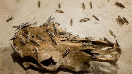 [날씨학개론] 아프리카에서 창궐한 대규모 사막 메뚜기떼…재앙으로 이어질까?