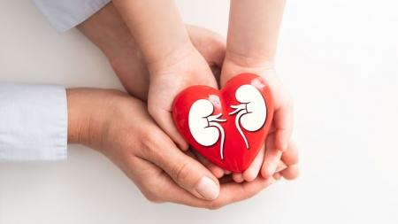 [내 몸 보고서] 새로운 생명을 선물하다…장기이식