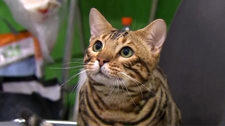 코로나19에 걸린 고양이, 다른 고양이에 전파 가능…사람 감염은 미지수